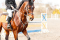 Bay horse with rider on show jumping competition Royalty Free Stock Photo