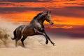Bay horse run in desert Royalty Free Stock Photo