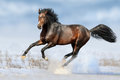Bay horse in snow Royalty Free Stock Photo