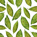 Bay leaf watercolor illustration isolated on white background, Hand drawn seamless pattern, Design food, Organic fresh spice ingre