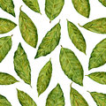 Bay leaf watercolor illustration isolated on white background, Hand drawn seamless pattern, Design food, Organic fresh