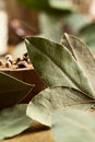Bay leaves Royalty Free Stock Photo