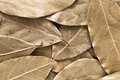 Bay leaves close up of dried as a background Stock Photo