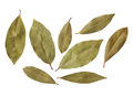 Bay leaves isolated on white background Stock Photos
