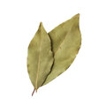 Bay leaves isolated on white background Stock Images