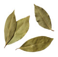 Bay leaves isolated white background Royalty Free Stock Images