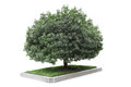 Bayberry tree Royalty Free Stock Photos