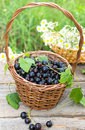 Bblack currant basket of black outdoor Stock Images