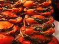 BBQ seafood series