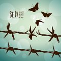Be free! barbed wire turning into butterflies