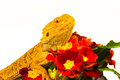Be my valentine dragon with flowers Stock Photography