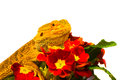 Be my valentine dragon with flowers Stock Images