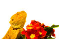 Be my valentine dragon with flowers Royalty Free Stock Image