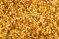 Bea gathered pollen granules Royalty Free Stock Photography