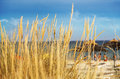 Beach behind de grass dune Royalty Free Stock Photo