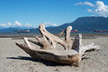 Beach carving wooden in the sand at spanish banks vancouver Stock Image