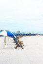 Beach chairs a line of is set up every morning on the for rent by tourists Royalty Free Stock Image