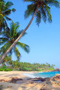 Beach with coconut palm trees blue sea and relaxation Stock Photo