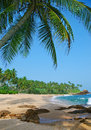 Beach with coconut palm trees blue sea and relaxation Stock Image