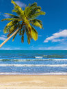 Beach with coconut tree on summer Stock Images