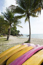 Beach and coconut tree tropical with palm haad than sadet koh phagnan island in thailand Stock Photography