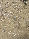 Beach covered with shells, background Royalty Free Stock Photo