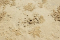 Beach crab hole sand of markings Stock Images