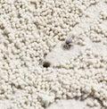 Beach crab markings Royalty Free Stock Photo