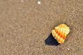 Beach detail a shell on a in mediterranean sea Royalty Free Stock Photo