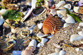 Beach details shells on a in mediterranean sea Royalty Free Stock Images