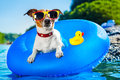 Beach dog on blue air mattress in refreshing water Royalty Free Stock Photography