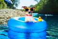 Beach dog on blue air mattress in water refreshing Royalty Free Stock Photography