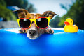 Beach dog on blue air mattress in water refreshing Royalty Free Stock Photo