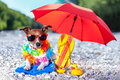 Beach dog under umbrella at with yellow rubber ducks Royalty Free Stock Photos