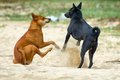 Beach dogs on the in vietnam are having fun Stock Photography