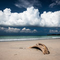 Beach driftwood and dark blue sky sand with white clouds Royalty Free Stock Images