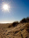 Beach dunes Stock Images