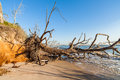 Beach erosion natural along the shoreline on big talbot island in jacksonville Stock Photos