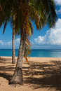 Beach Of Grande Anse, Deshaies...