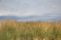 Beach Grass Background Royalty Free Stock Photo