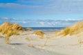 Beach grass on dune Royalty Free Stock Photo