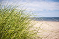 Beach grass growing on sandy at atlantic coast of prince edward island canada Stock Image