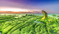 Beach grass jelly moss dawn on summer day days the sun shines covered rocks green highlighter and the path of large stone Stock Photos
