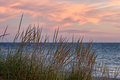 Beach Grass Lake Michigan Sunset Royalty Free Stock Photo