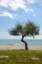 Beach Landscape, Sea, Sand, Sun & Trees Royalty Free Stock Photo