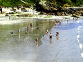 The beach at looe cornwall families enjoying a paddle on low tide south england uk Stock Photos