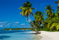 Beach with a lot of palms and white sand caribbean Royalty Free Stock Photo