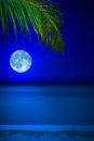 Beach at night with the moon and a palm tree Royalty Free Stock Images