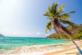 Beach and Palm Tree Royalty Free Stock Photography