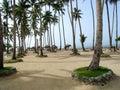 Beach Palm Trees Royalty Free Stock Photo